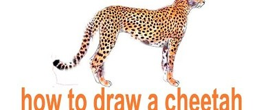 How to draw a cheetah, draw animals, #Kids, #YouTubeKids, #Howtodraw