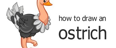 how to draw an ostrich, draw animals, #children, #youTubeKids, #howto